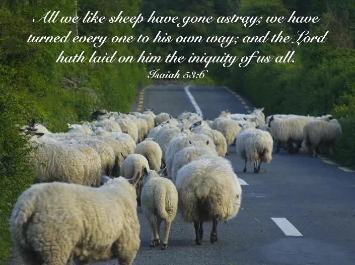 Sheep Astray